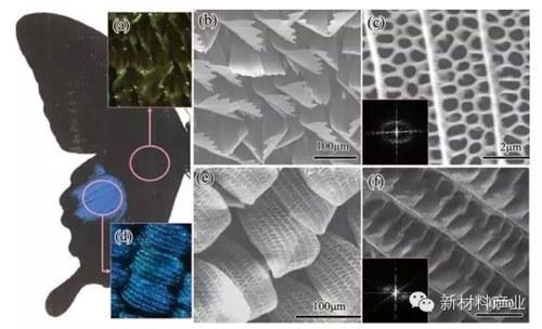 显微镜纸张纤维结构